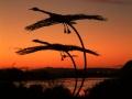 swans-sunset-074b